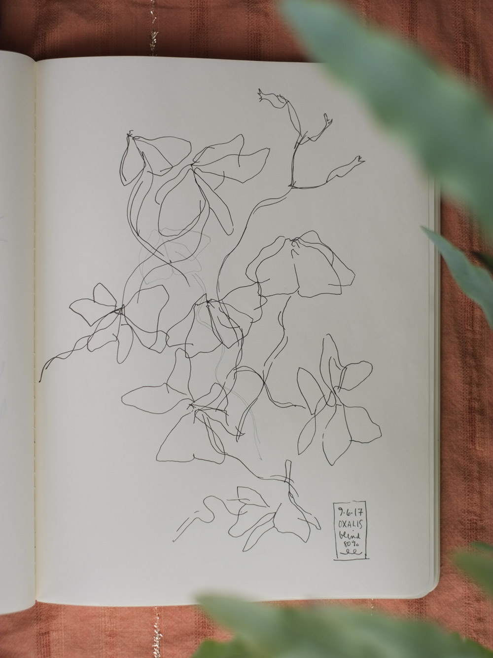 Erin_Ellis_daily_botanical_blind_drawings_sept_2017.jpg-6.jpg