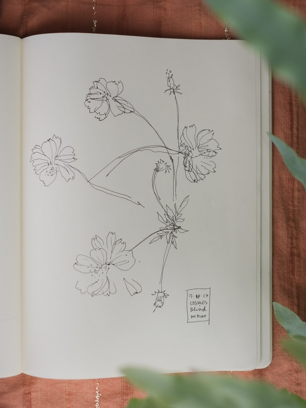 Erin_Ellis_daily_botanical_blind_drawings_sept_2017.jpg-12.jpg