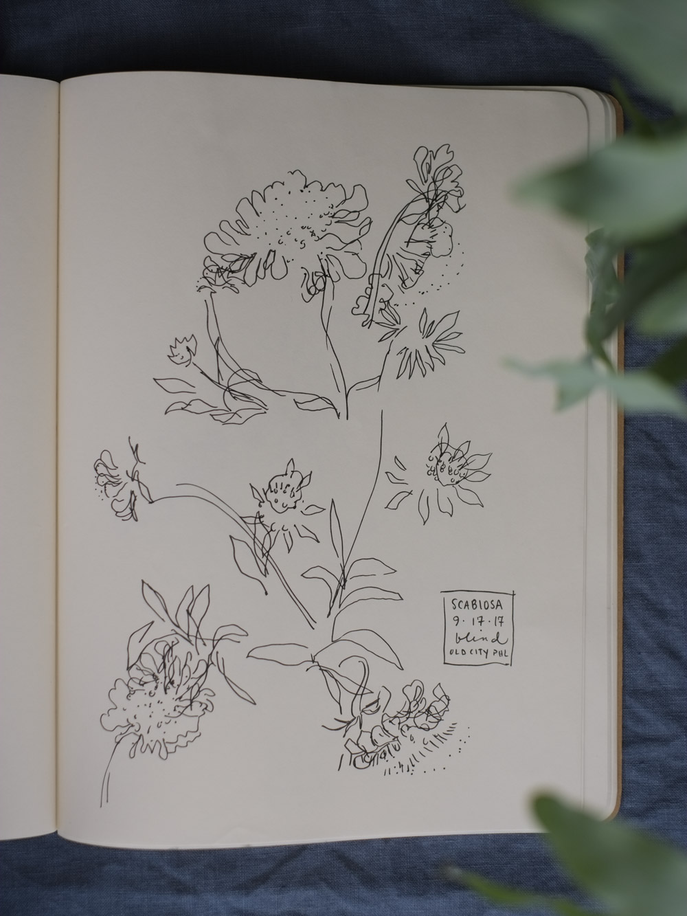 Erin_Ellis_daily_botanical_blind_drawings_sept_2017.jpg-21.jpg