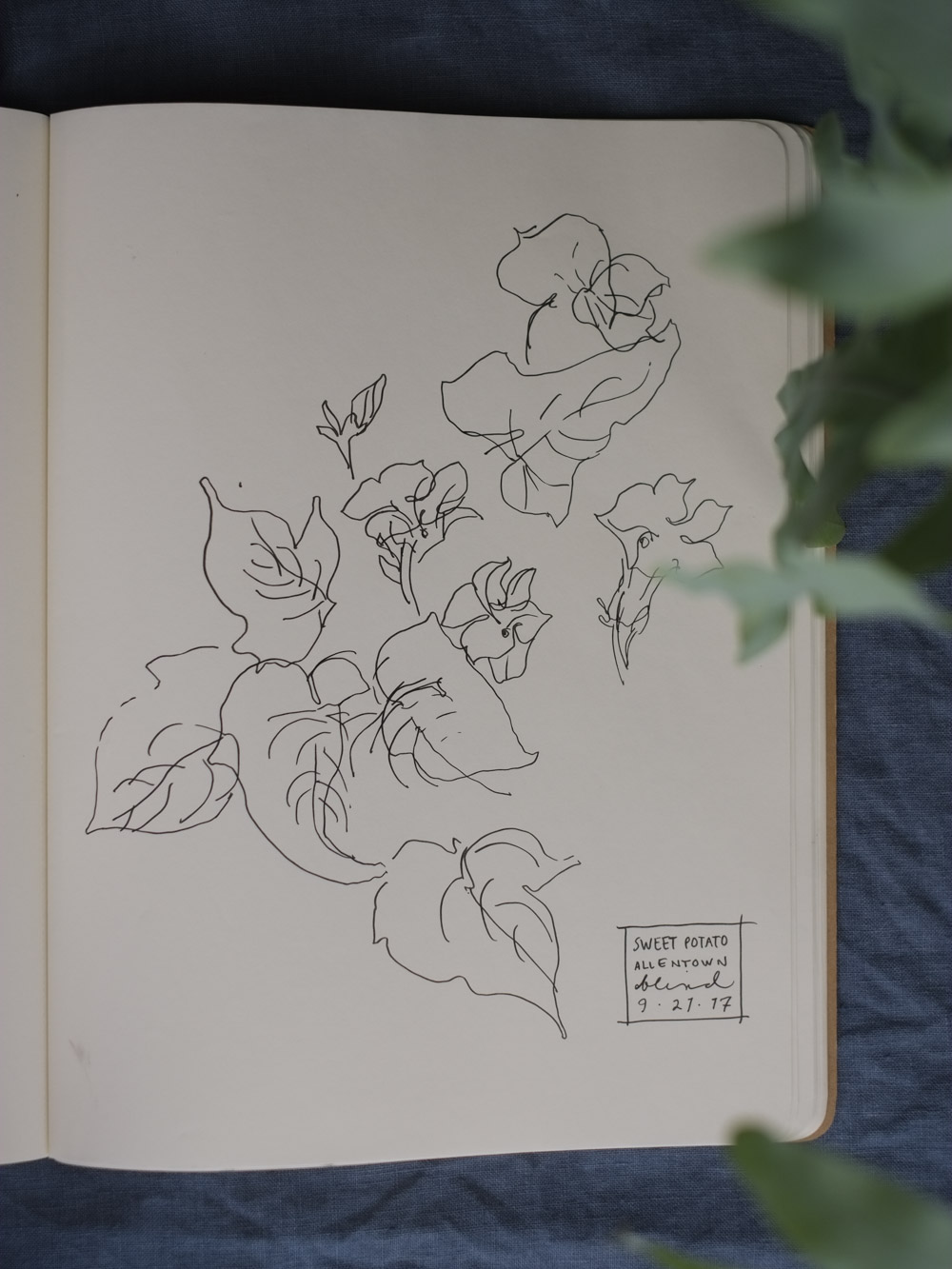 Erin_Ellis_daily_botanical_blind_drawings_sept_2017.jpg-25.jpg