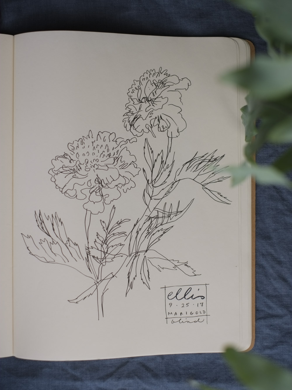 Erin_Ellis_daily_botanical_blind_drawings_sept_2017.jpg-29.jpg
