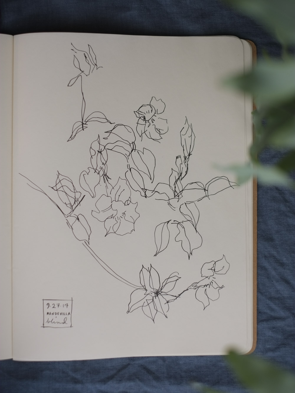 Erin_Ellis_daily_botanical_blind_drawings_sept_2017.jpg-31.jpg