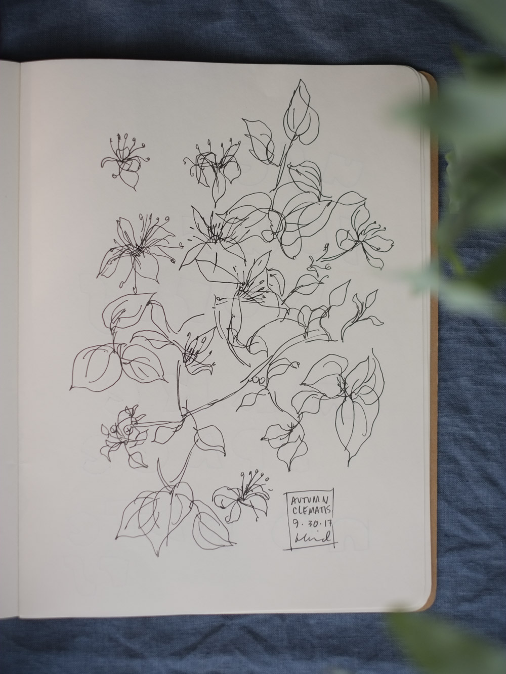 Erin_Ellis_daily_botanical_blind_drawings_sept_2017.jpg-35.jpg