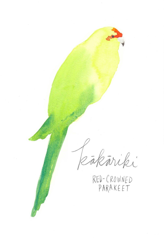 erin-ellis_watercolor_bird_study_kakariki.jpg