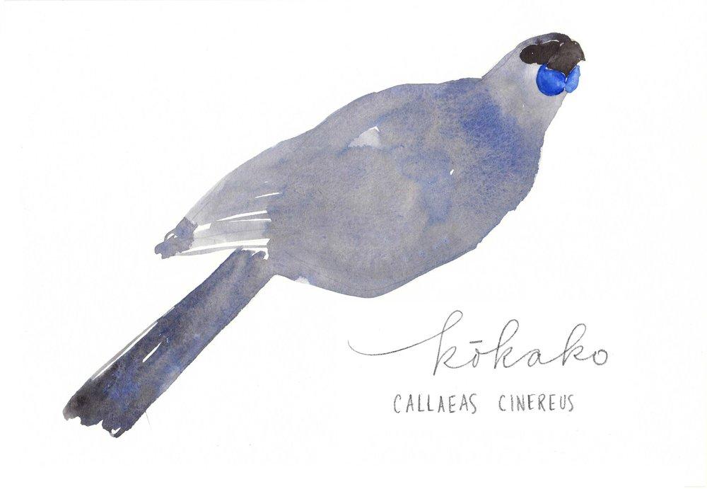 erin-ellis_watercolor_bird_study_kokako.jpg