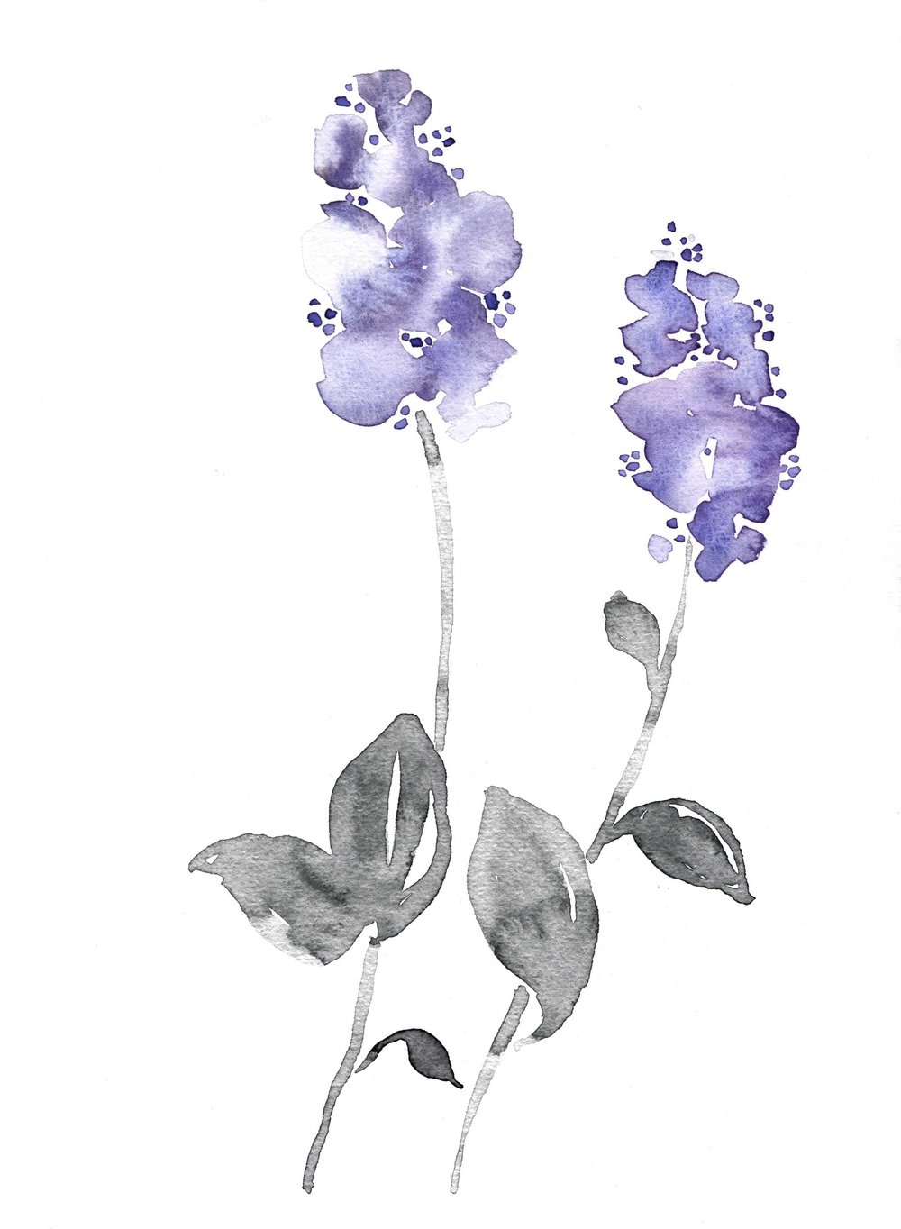erin-ellis_botanical_floral_watercolor_ceanothus.jpg