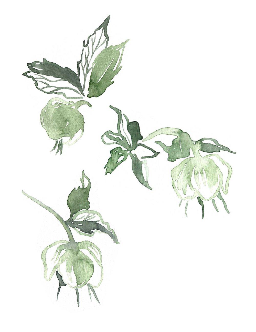 erin-ellis_botanical_floral_watercolor_hellebore.jpg
