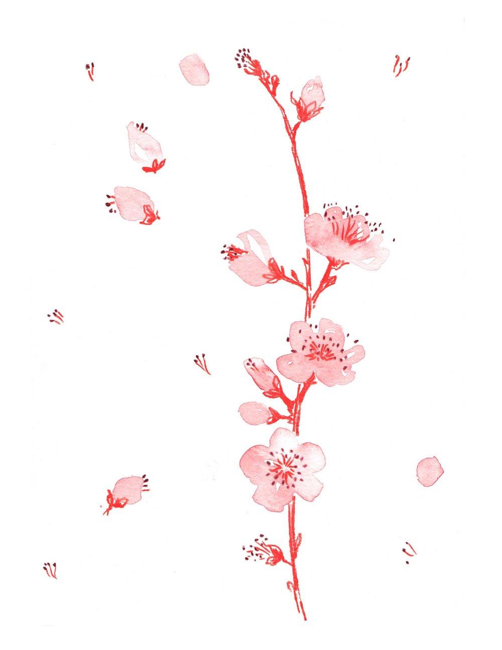 erin-ellis_botanical_watercolor_cherry_blossoms.jpg