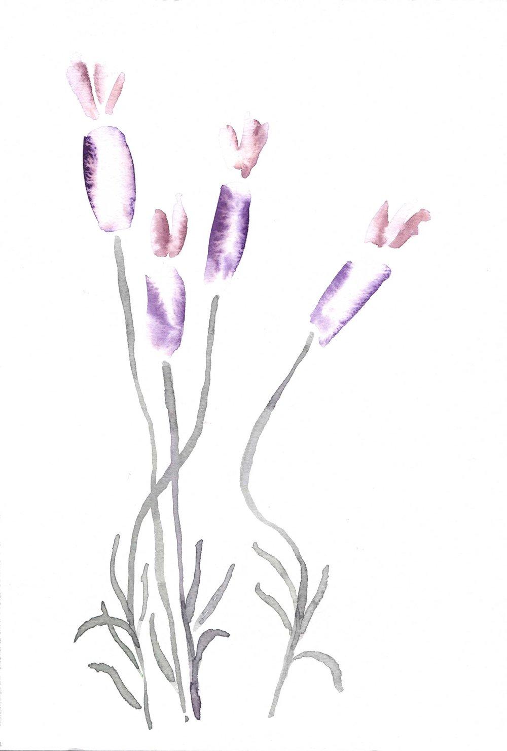 erin-ellis_botanical_watercolor_floral_spanish_lavender.jpg
