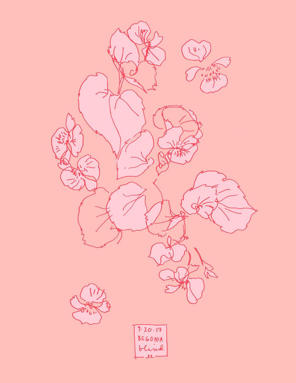 Begonia botanical line color illustration
