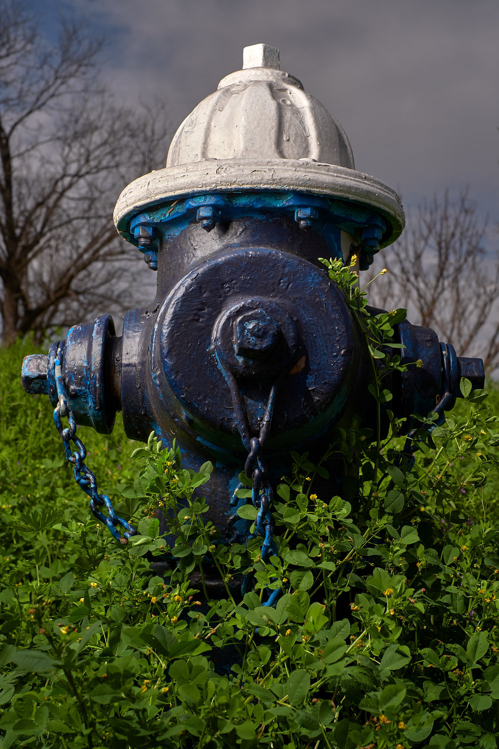 Hydrant Portrait #13
