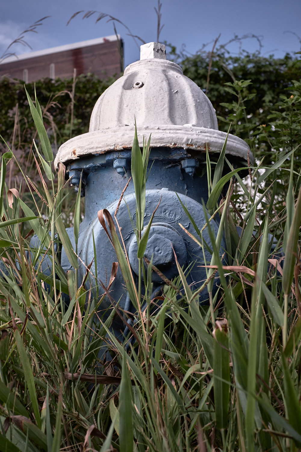 Hydrant Portrait #53