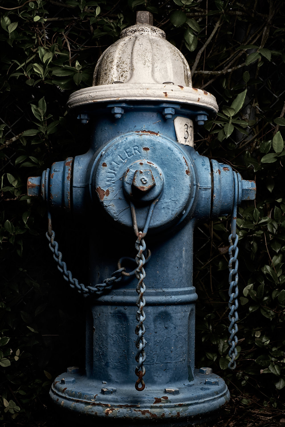 Hydrant Portrait #67