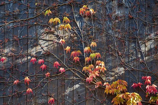 autumn-654852_640.jpg