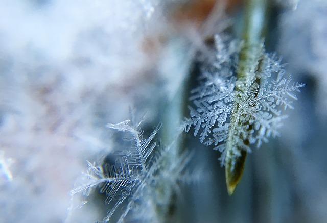 frost-1209402_640.jpg
