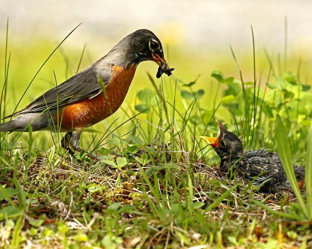 Feeding Time by Hans Schrag