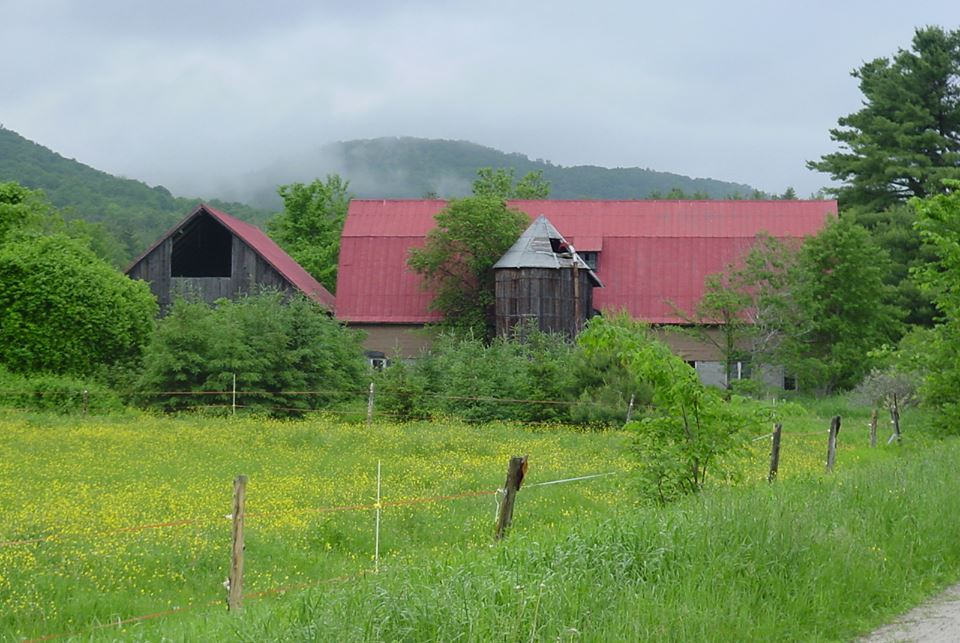 The lush green of early summer is not that far away. Photograph by Elizabeth Rankin on Chambers Rd.