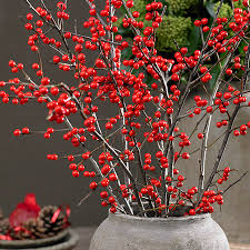 Winter Berries.jpg