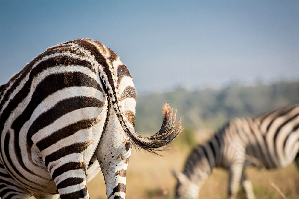 Kenya_Nairobi_NationalPark-1510.jpg