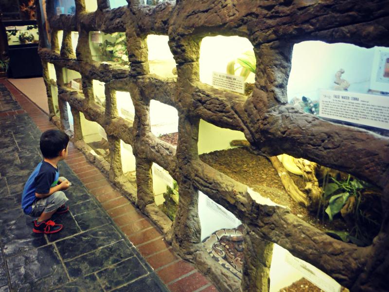 Reptile Zoo (2).JPG