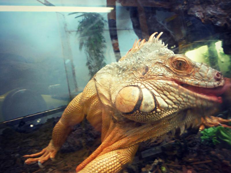 Reptile Zoo (3).JPG