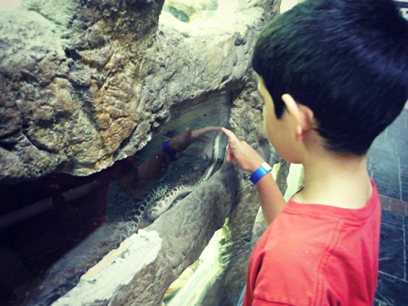 Reptile Zoo (1).JPG