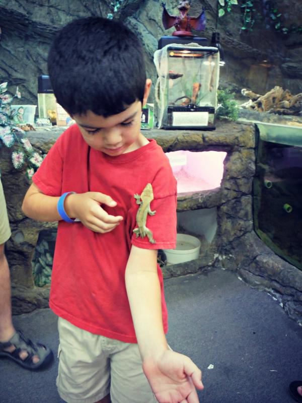 Reptile Zoo (4).JPG