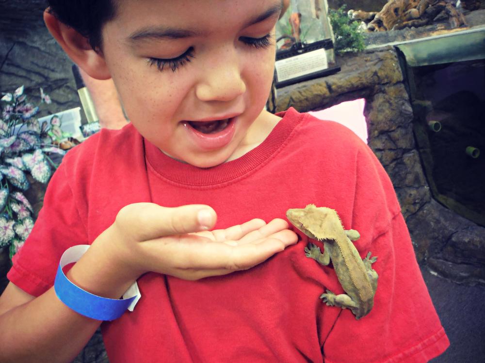Reptile Zoo (5).JPG