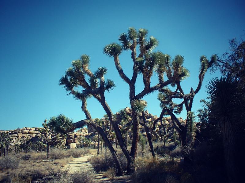 Joshua Tree Hiking.jpg