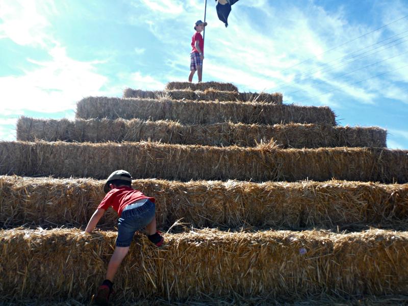 Forneris Farms Harvest Festival 10.jpg