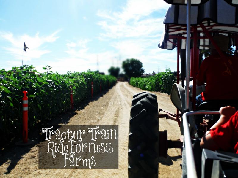 Forneris Farms Harvest Festival 03.jpg