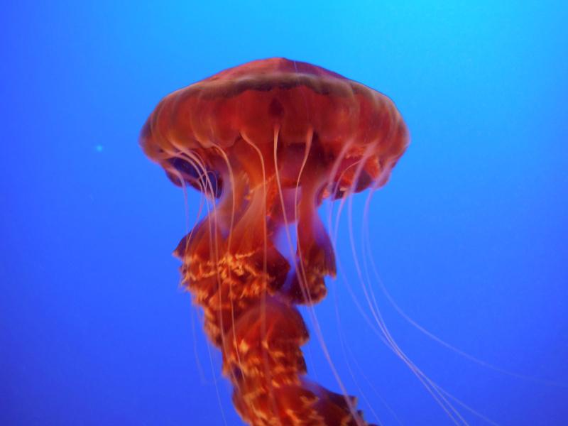 Monterey Bay Aquarium (42).JPG
