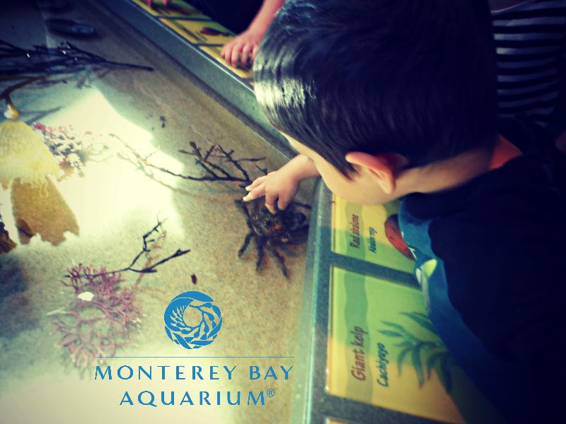 Monterey Bay Aquarium (9).JPG