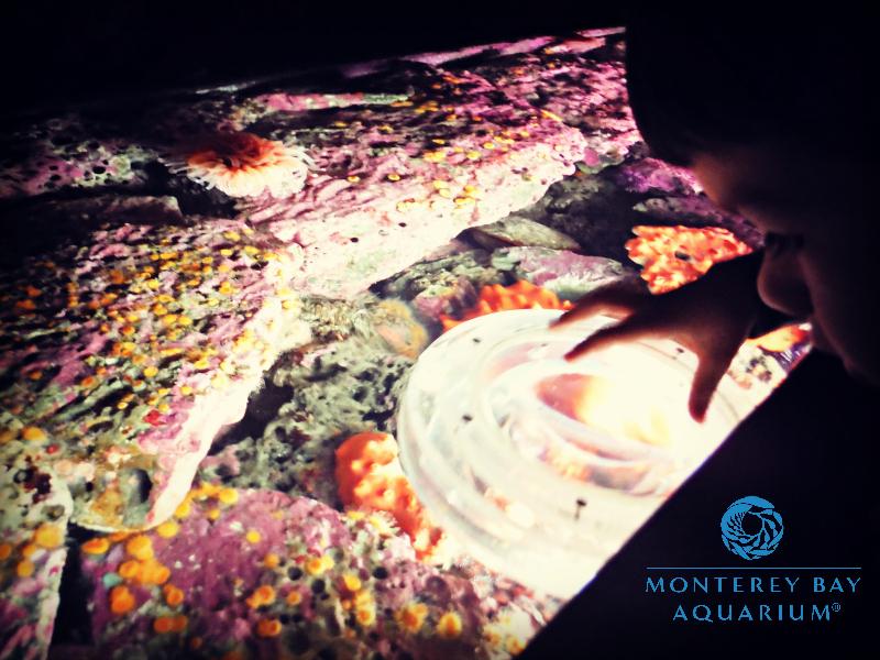 Monterey Bay Aquarium (16).JPG
