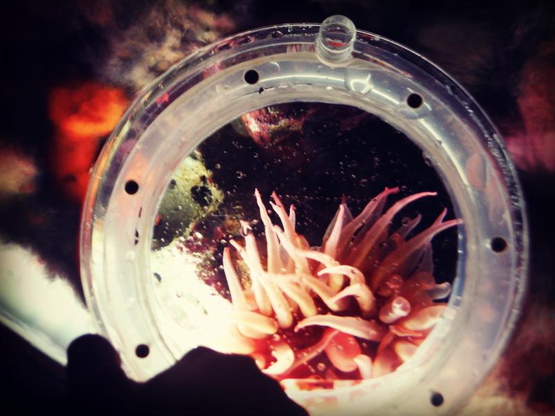 Monterey Bay Aquarium (23).JPG