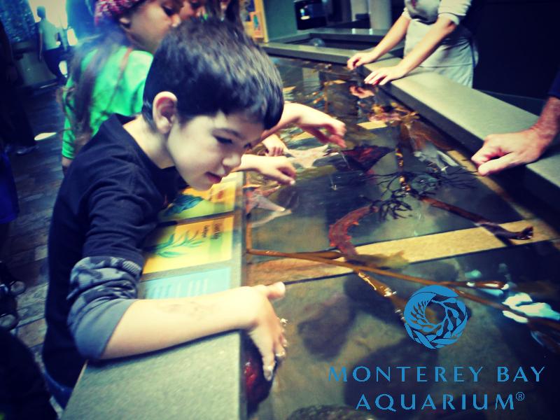 Monterey Bay Aquarium (7).JPG