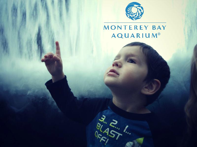 Monterey Bay Aquarium (29).JPG