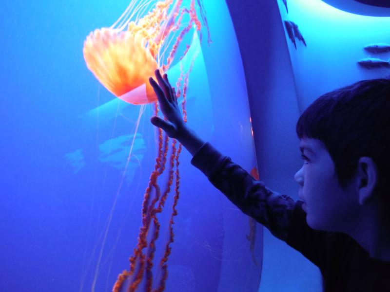 Monterey Bay Aquarium (39).JPG