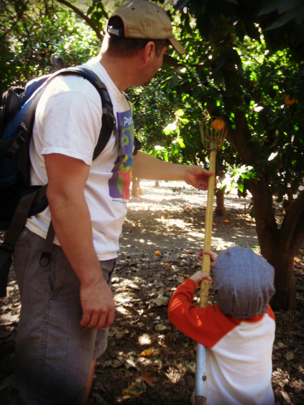 Orange Picking La Verne Heritage Park