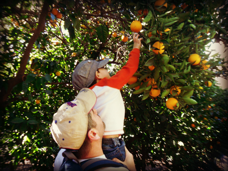 Orange Picking La Verne