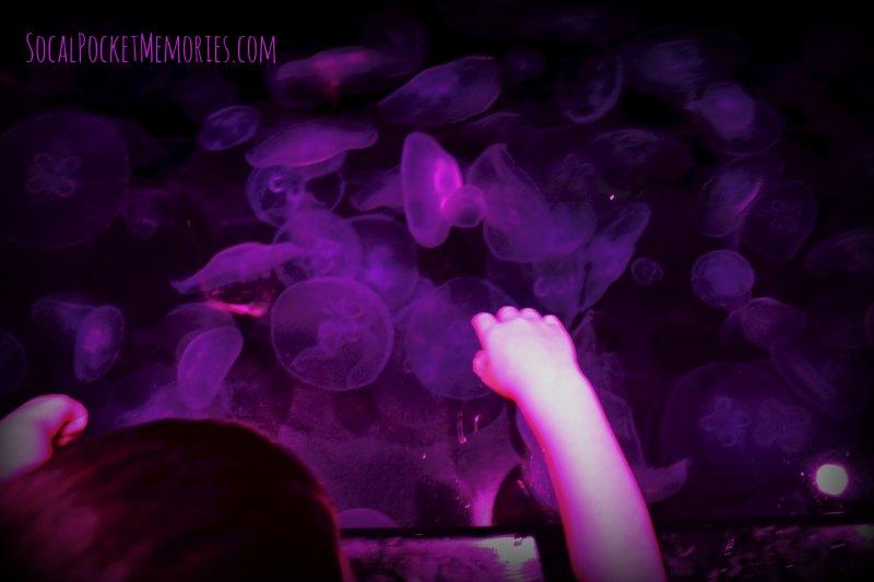 Aquarium of the Pacific Jellies