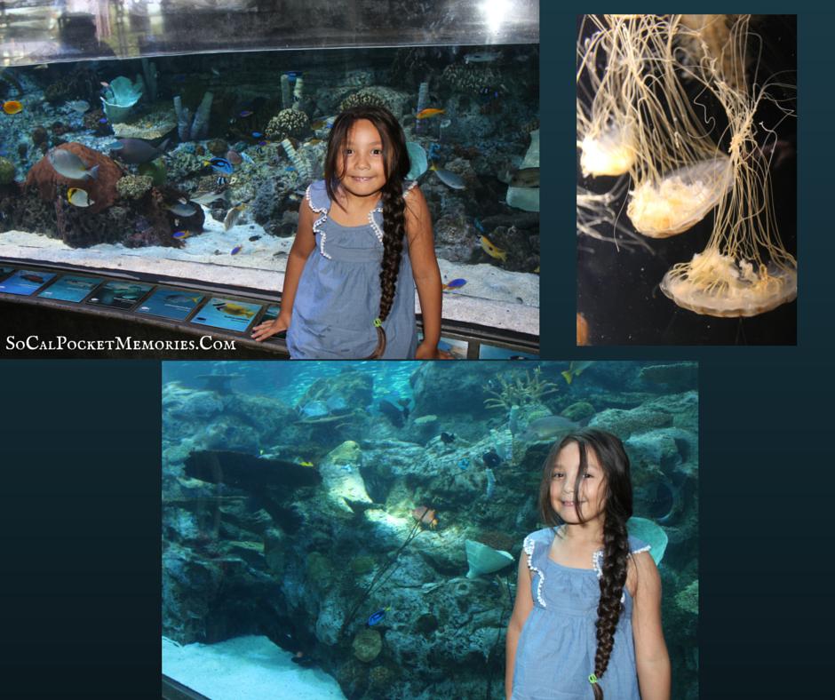 Aquarium of the pacific.png