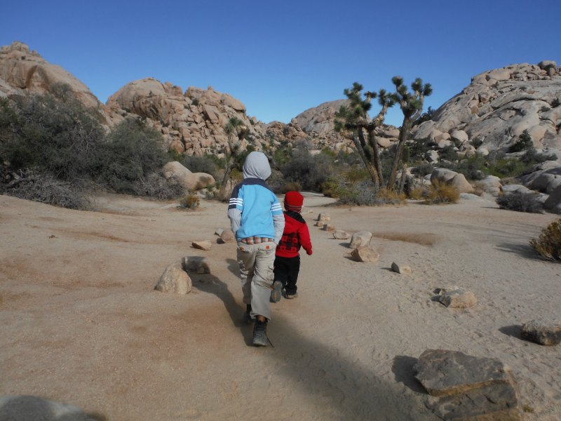 Joshua Tree Hikes