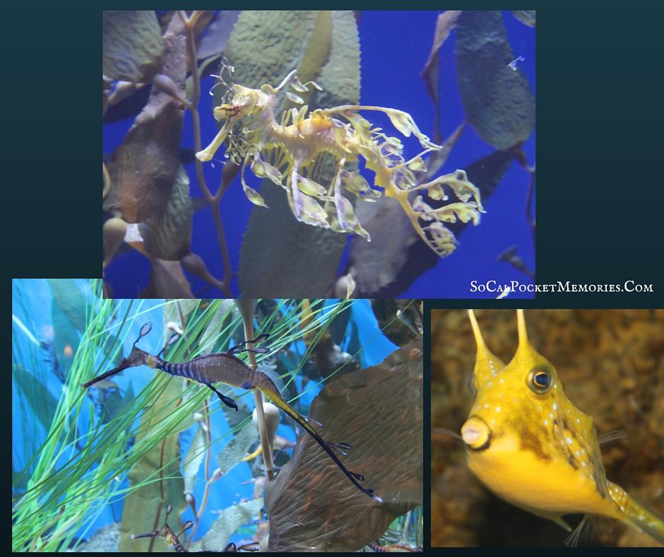 Aquarium of the pacific (1).png