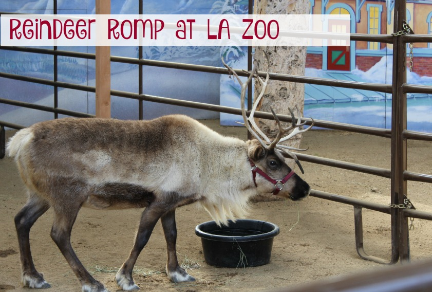 Reindeer Romp at LA Zoo
