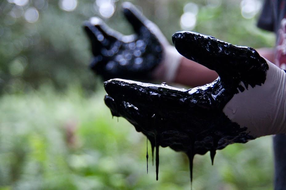 Chevron har medvetet dumpat nästan 70 miljarder liter giftig olja i den ecuadoriska Amazonas. För mer om detta kolla in vår specialgjorda kampanjsajt (på engelska): www.chevrontoxico.com