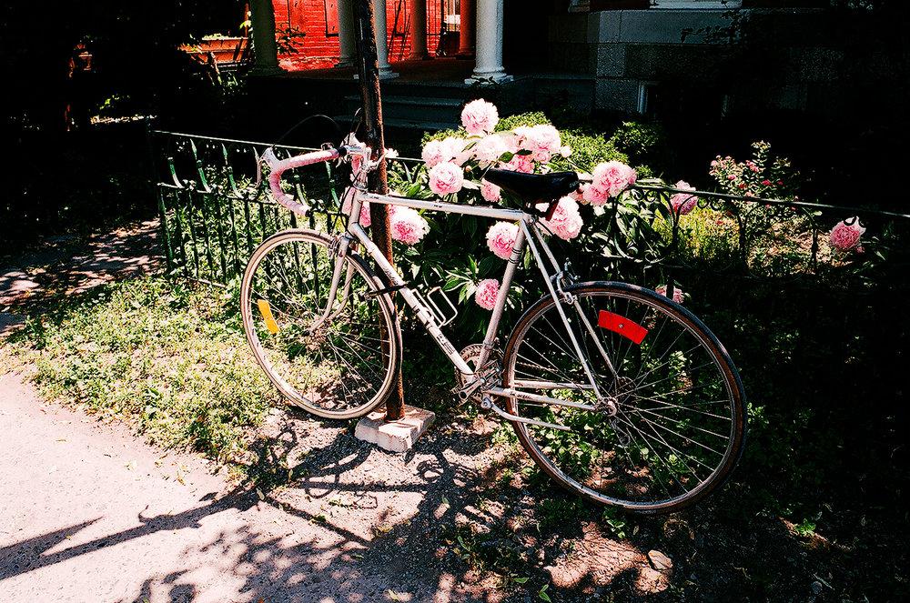 Flowers & A Bike