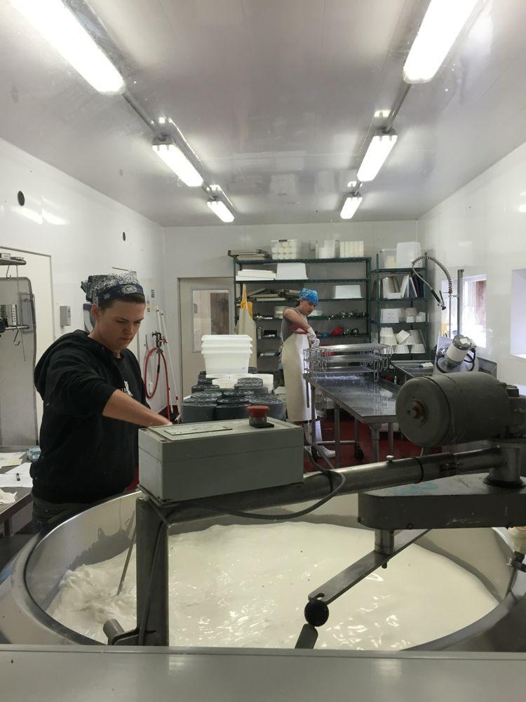 Cheese artisans at work!