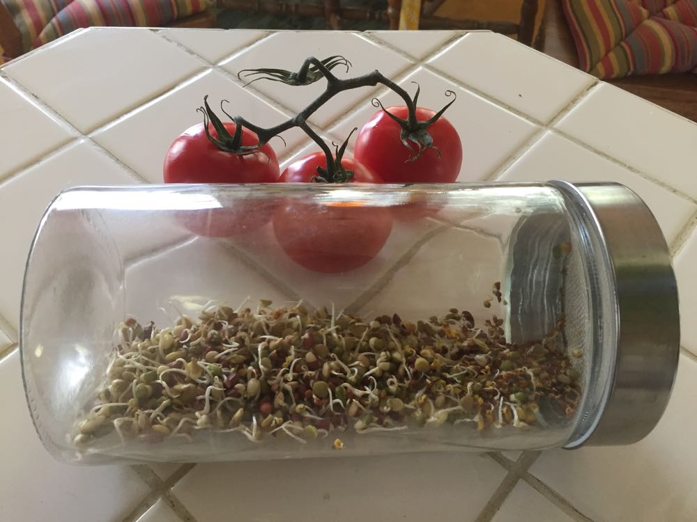 A mix of Azuki, Lentil, Mung beans, and Radish seeds