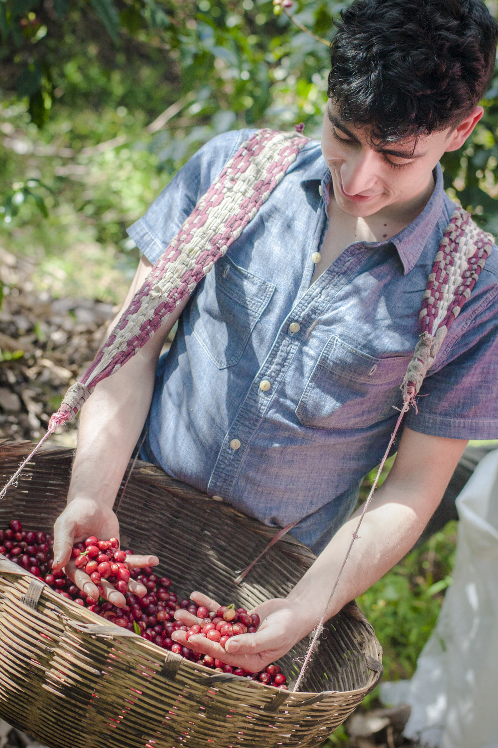 After a long hike we had the chance to pick our own coffee cherries.